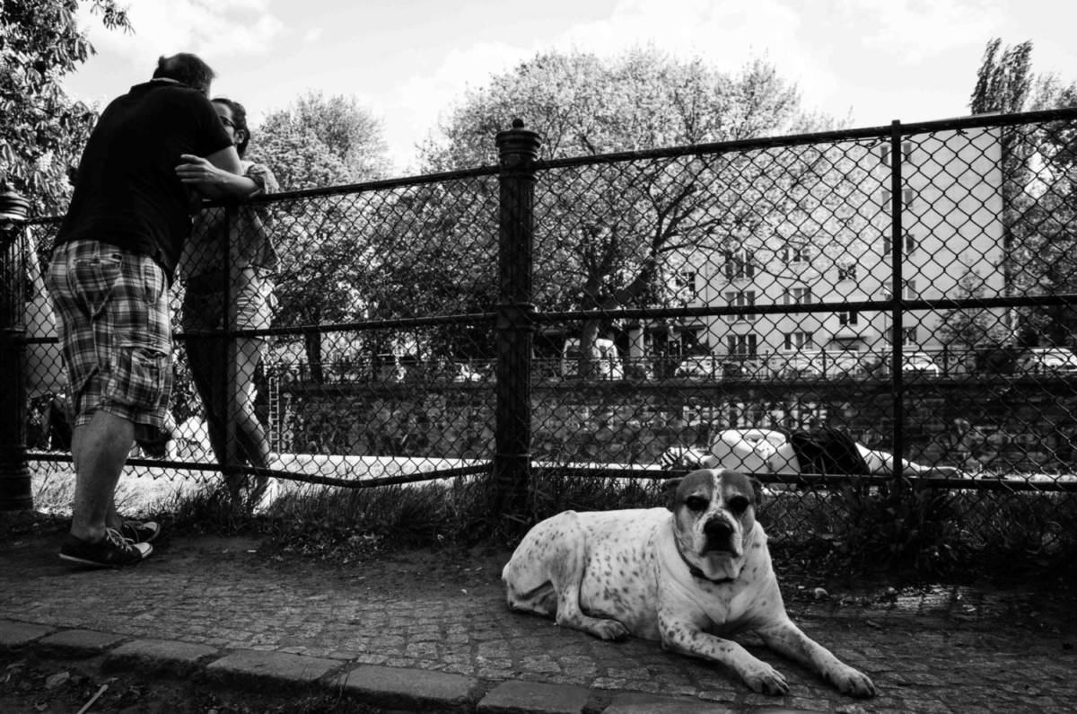 Storytelling in Photography - Dog Days