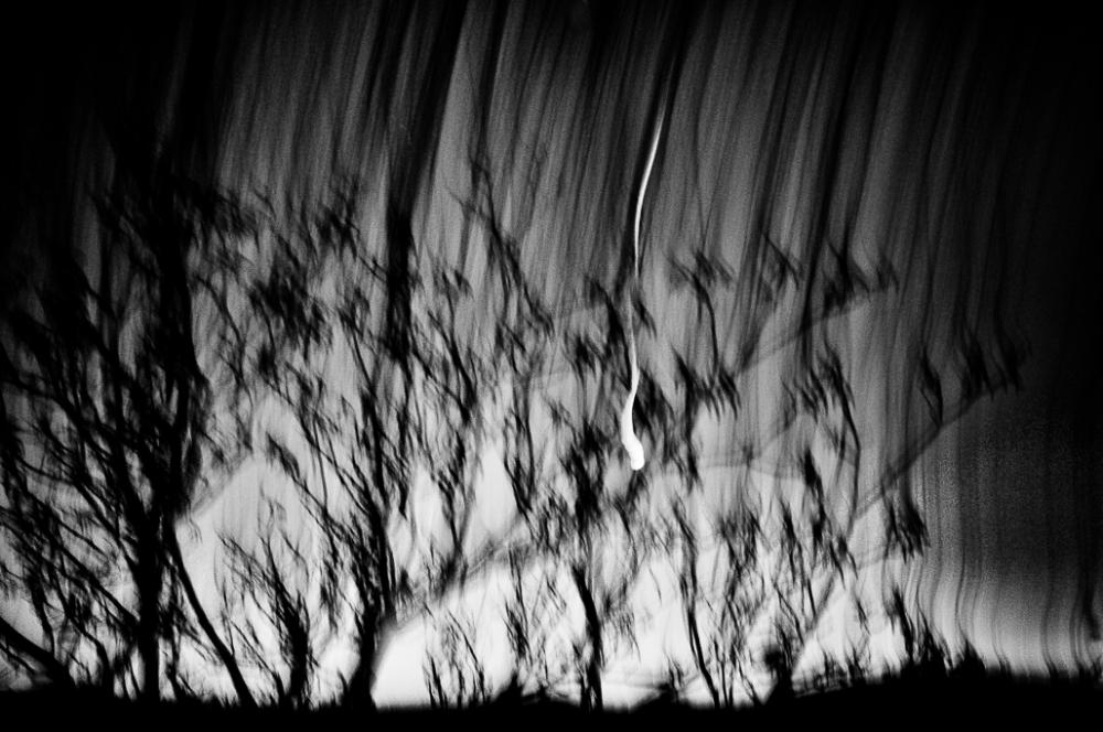 Eschatology - Matthias Koch Trees