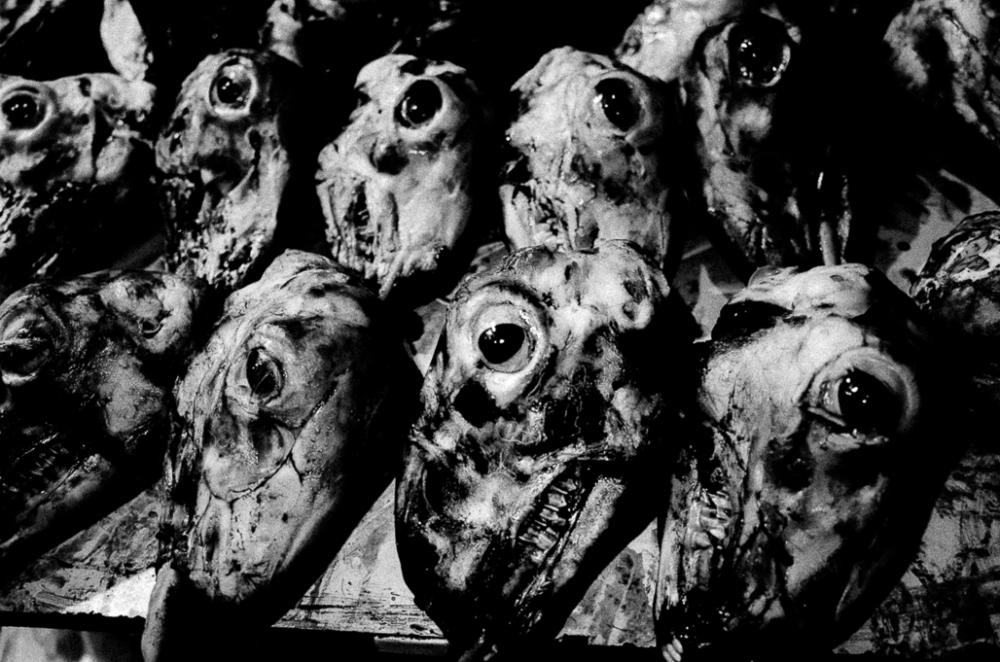 Eschatology - Matthias Koch Heads