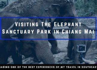 Elephant Jungle Sanctuary Cover Photo