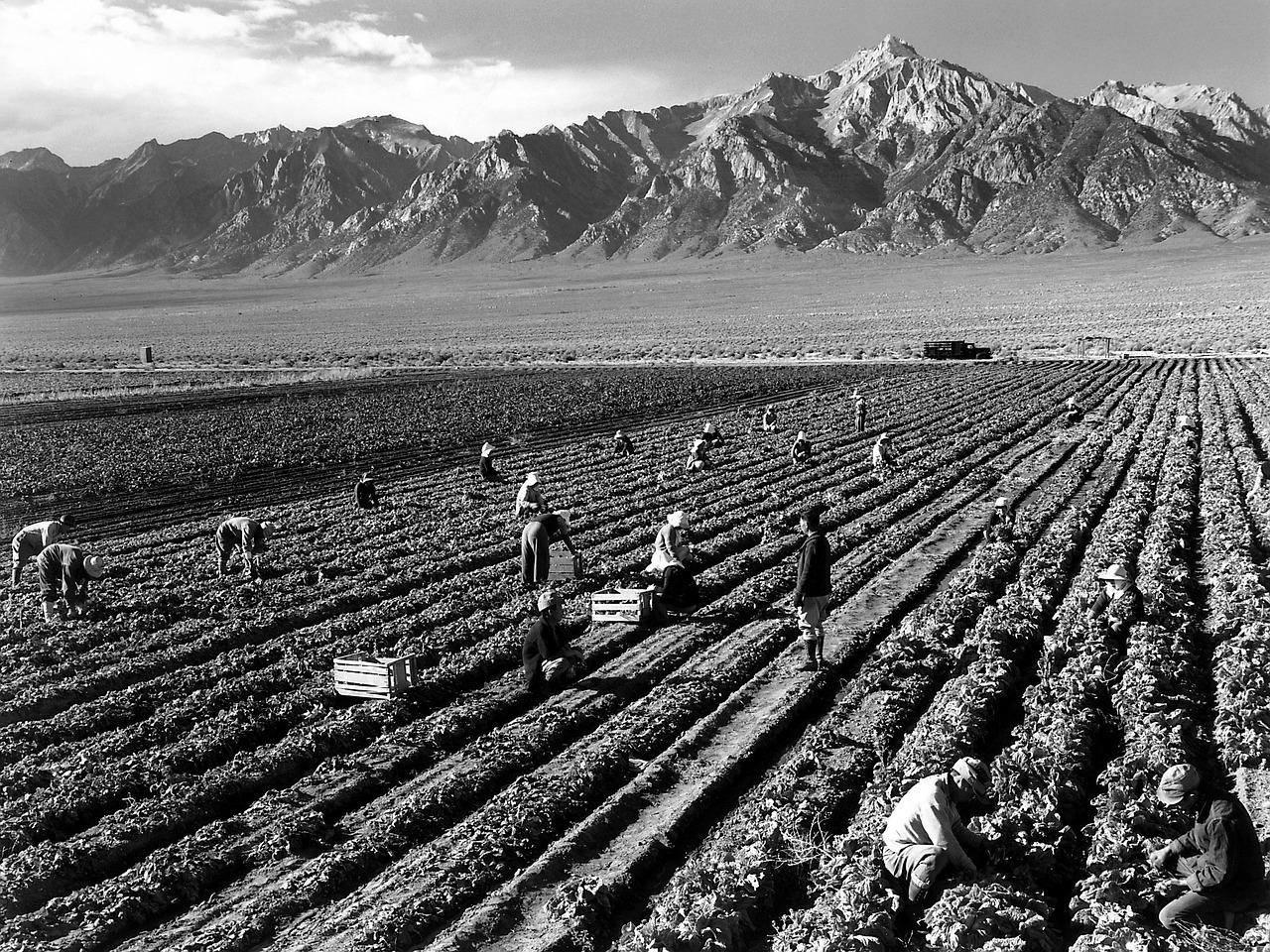 Ansel Adams Harvest Fieldwork Mount Williamson