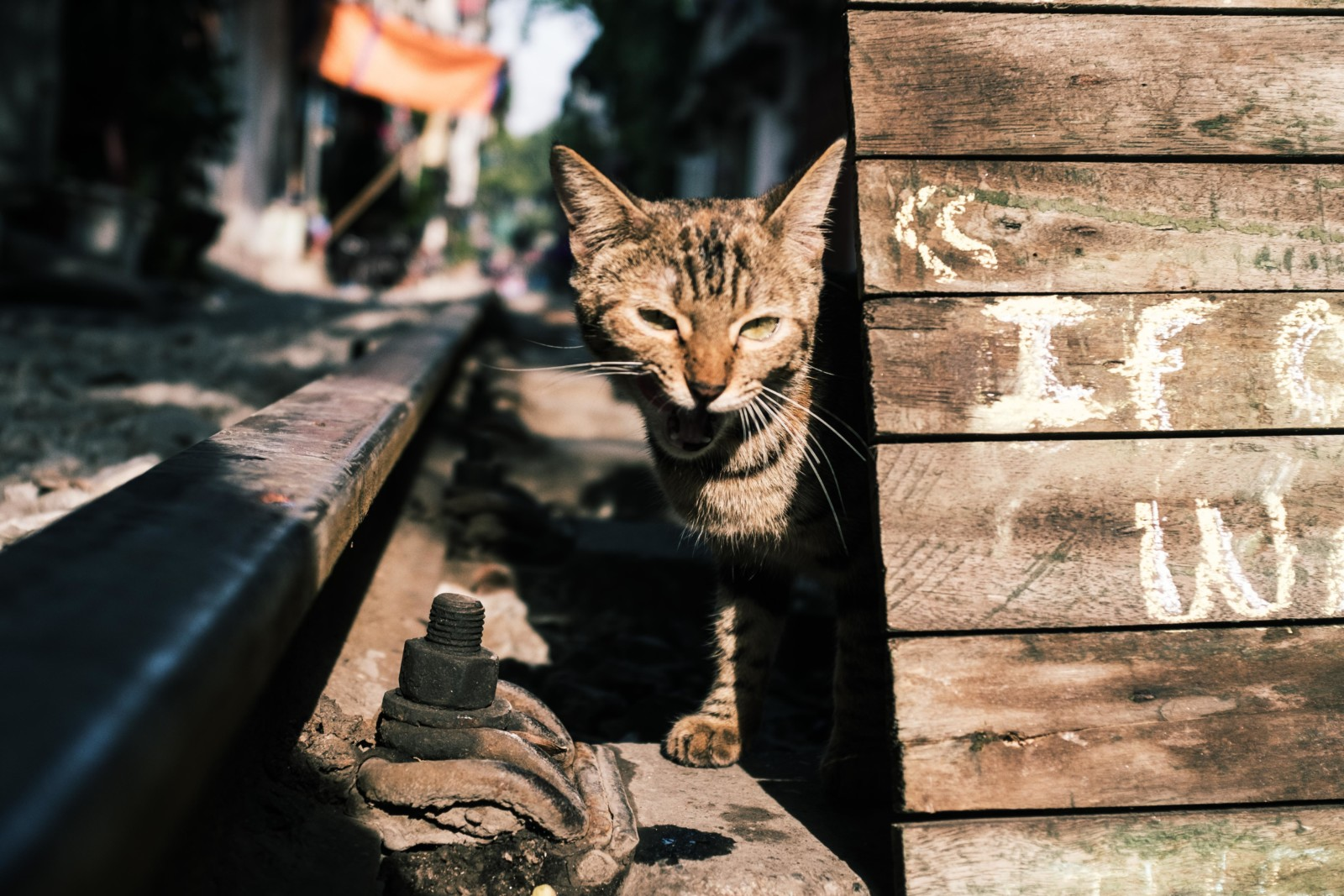A Cat on a Railtrack